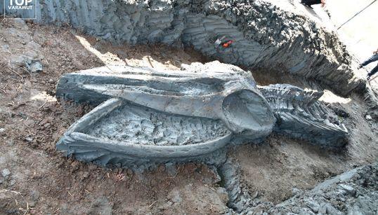 3000年以上前のクジラの骨、タイで発見。ほぼ完全な状態は「珍しい」(画像集)