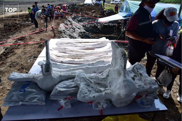 ほぼ完全な状態で見つかったクジラの骨