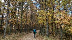 Turismo de naturaleza: ¿una solución