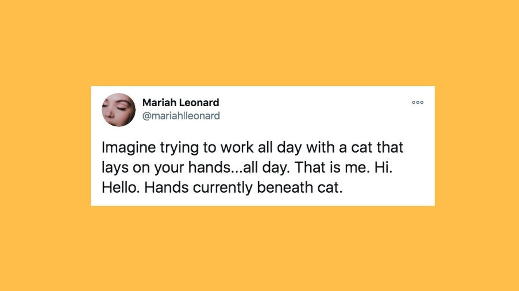 28 Of The Funniest Tweets About Cats And Dogs This Week (Nov. 21-27)