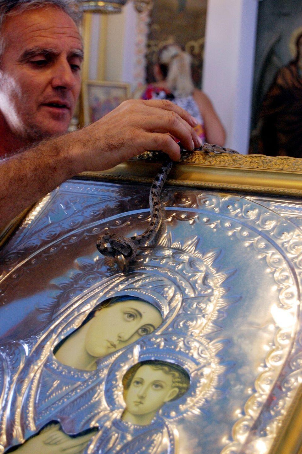 Φωτογραφία αρχείου 2008 - Κεφαλονιά , τα φιδάκια της Παναγίας, ανήμερα του Δεκαπενταύγουστου στο χωριό Αργίνια