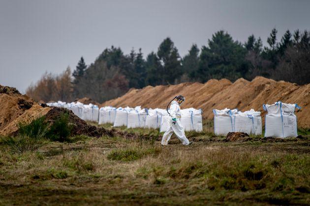 Une fosse commune où les autorités sanitaires danoises, assistées par des membres...