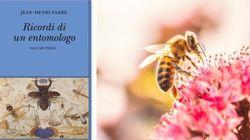 Da Kafka a Nabokov, da Calvino a Fabre. Il fascino degli insetti, molto simili a noi (di G.