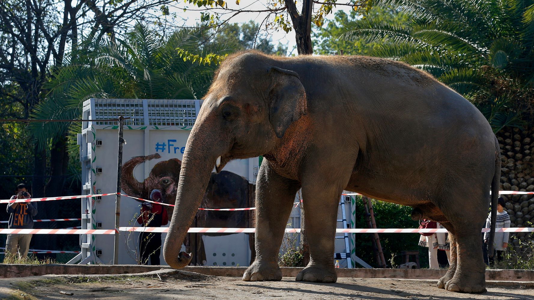 'World's Loneliest Elephant' Kaavan Starts Trip To Cambodia Sanctuary