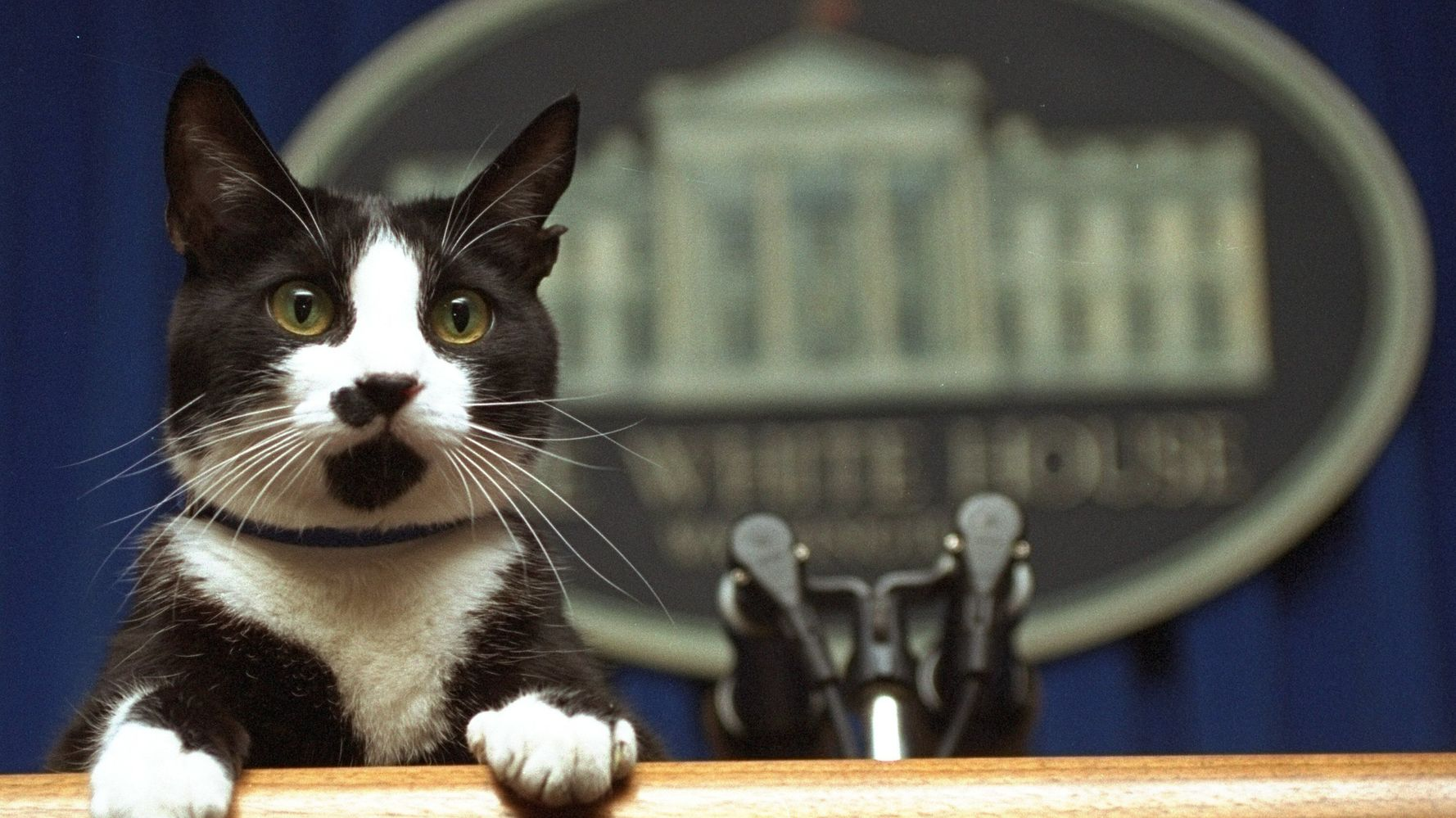 First Cat? Bidens Reportedly Bringing A Feline To The White House