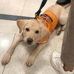 盲導犬の入店を拒否。韓国「ロッテマート」の対応に非難殺到し、謝罪