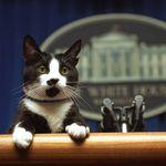 ホワイトハウスに猫が帰ってくる。12年ぶりの「ファーストキャット」をバイデン氏が飼うことに