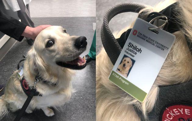 Un chien a été recruté dans un hôpital de l'Ohio pour remonter le moral des employés, aux