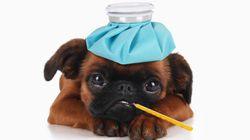 Cómo saber si tu perro está enfermo: 14 síntomas para