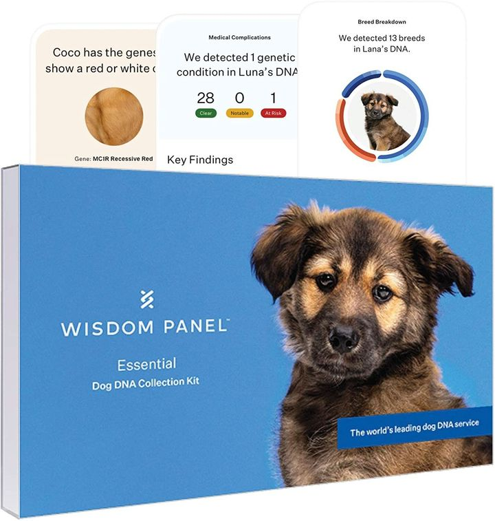 Wisdom Panel dog DNA Cyber Monday deal for 2020.