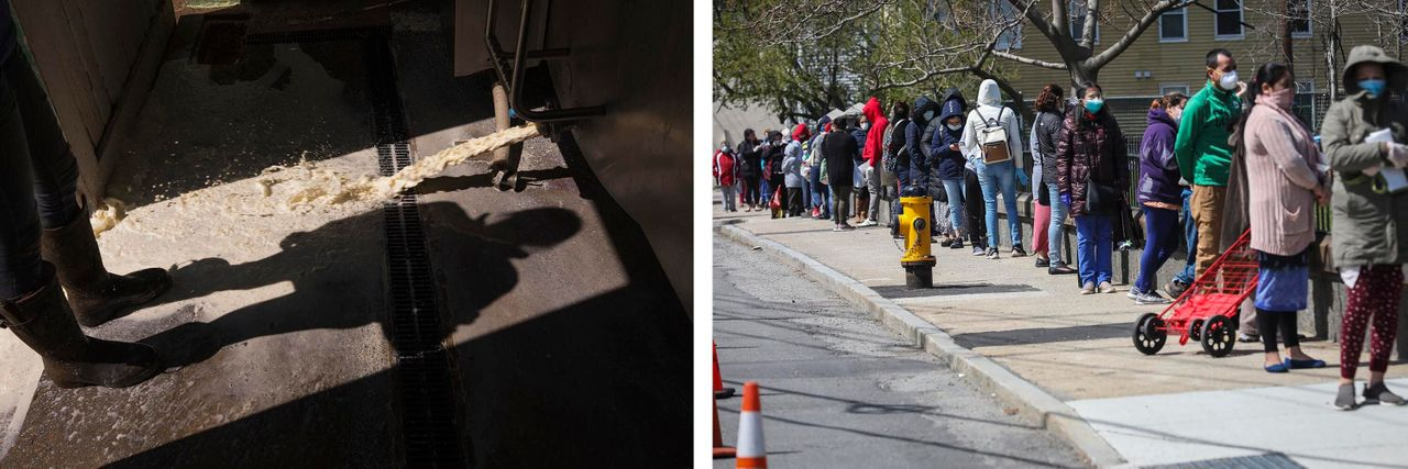 Left: A dairy farmer dumps excess milk at Plurenden Manor Farm in Ashford, U.K. The pandemic forced farmers around the world to dump produce they couldn't sell. Right: People line up for food donations in Waltham, Massachusetts, on April 11, 2020. The food bank has seen a surge in demand since the pandemic began. Credit: Getty Images