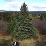 Why Nova Scotians Send A Christmas Tree To Boston Every