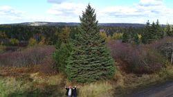 Why Nova Scotians Send A Christmas Tree To Boston Every