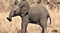 ゾウの赤ちゃんは2022年生まれ。アメリカの動物園がエコー映像公開(動画)