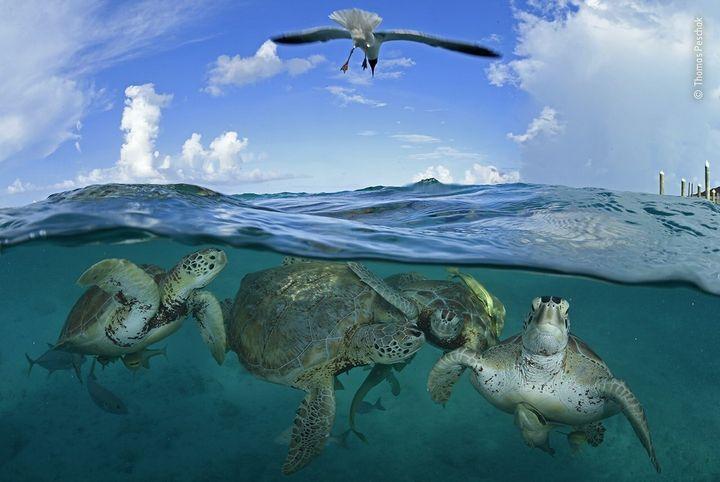 (Thomas Peschak/Wildlife Photographer of the Year/PA)