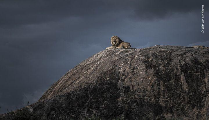 (Wim van den Heever/Wildlife Photographer of the Year/PA)