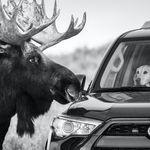 영국 자연사 박물관이 선정한 올해 야생동물 사진