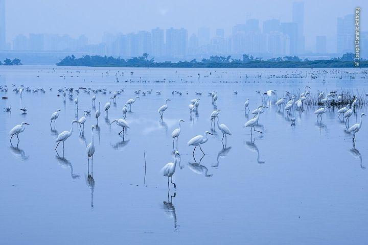 (Joseph Dominic Anthony/Wildlife Photographer of the Year)