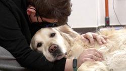Los perros terapia que han marcado la diferencia en una escuela de educación