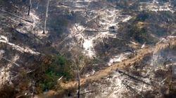La deforestación en la Amazonia alcanza su récord en 12