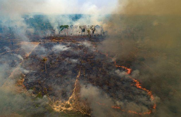 L'Amazzonia brucia per