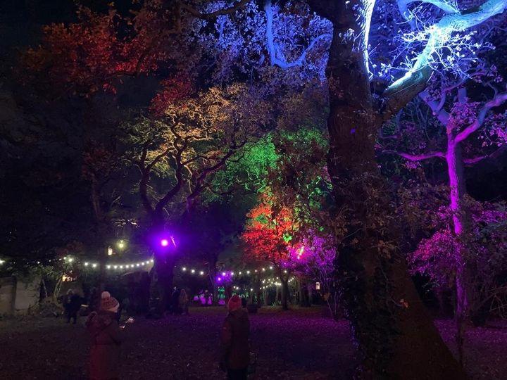 Fineline Lighting Christmas Light Trail