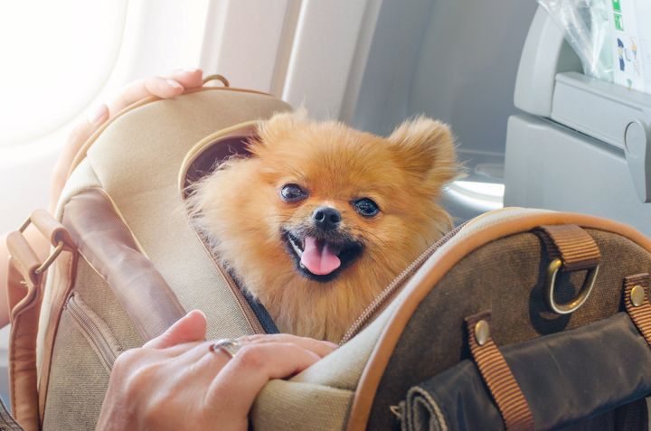 Different airlines have different policies around traveling with animals. But according to a new Department of Transportation