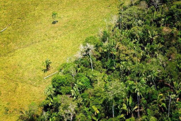 Sai quanta foresta hai mangiato oggi? È tempo di