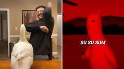 Los 10 vídeos de TikTok más virales de