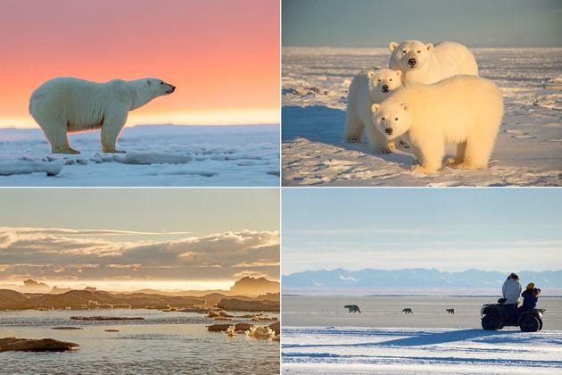 Des visiteurs en véhicule tout-terrain observent une ourse polaire et ses petits sur l'Ile