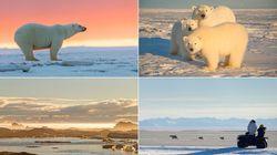 Paradoxalement, certaines espèces menacées dépendent du tourisme pour