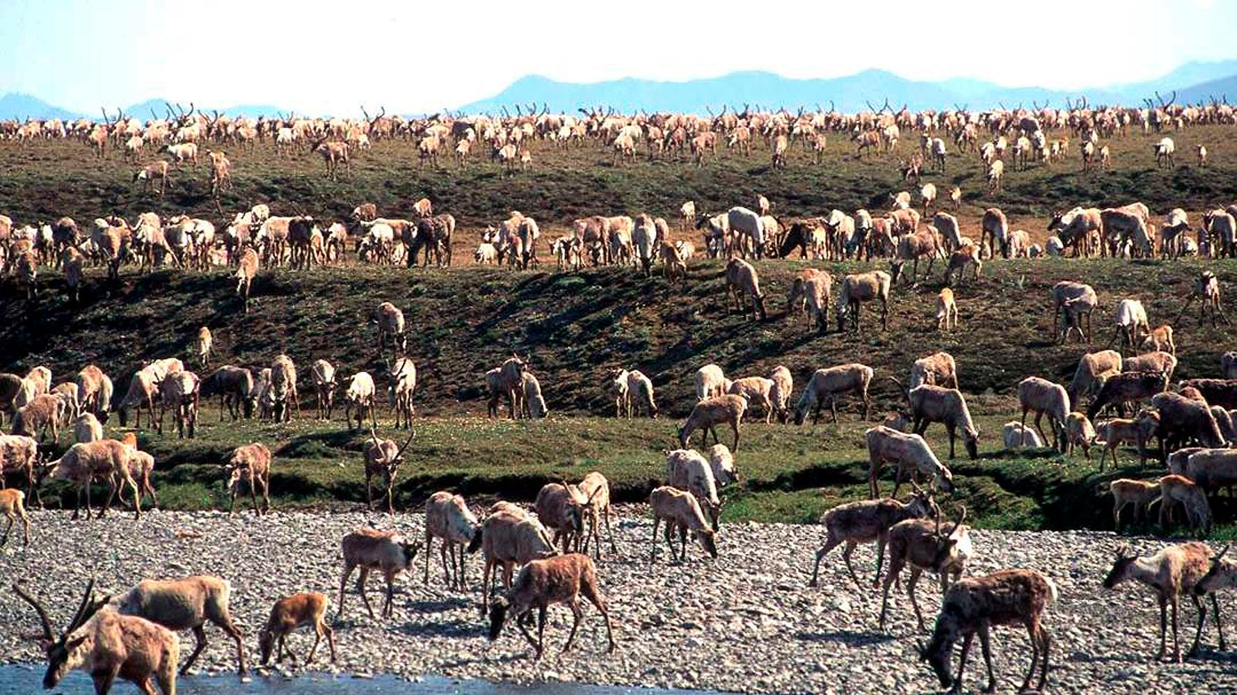 Trump To Sell Arctic Refuge Oil Leases 2 Weeks Before Biden Inauguration