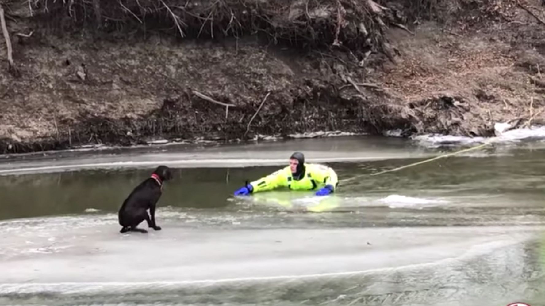 Watch First Responders Rescue Frightened Dog Stranded On A Chunk Of Ice