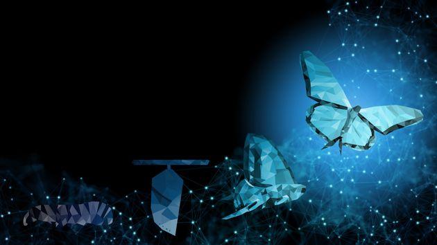 ¿Qué ocurre cuando las mariposas del alma baten sus