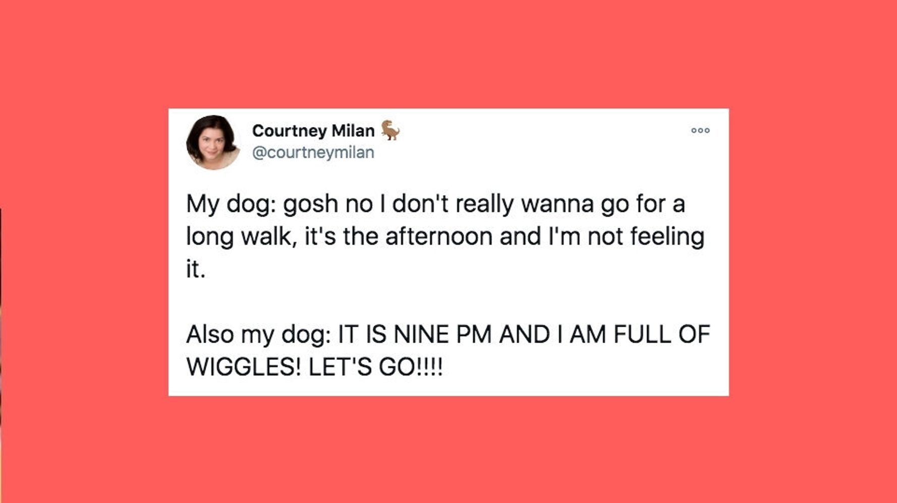30 Of The Funniest Tweets About Cats And Dogs This Week (Nov. 28-Dec. 4)