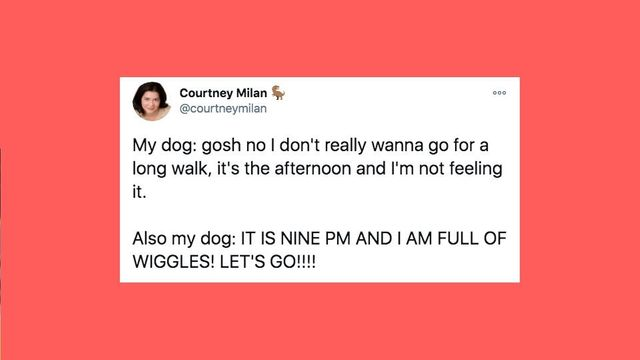 30 Of The Funniest Tweets About Cats And Dogs This Week.jpg