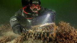 Retrouvée en mer Baltique, une rare machine nazie Enigma sera