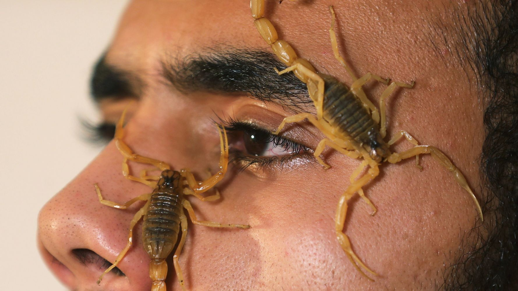 Egyptian Man Finds Fortune Hunting Scorpions For Venom