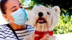 Un estudio aclara por qué el covid afecta a algunas mascotas y no a