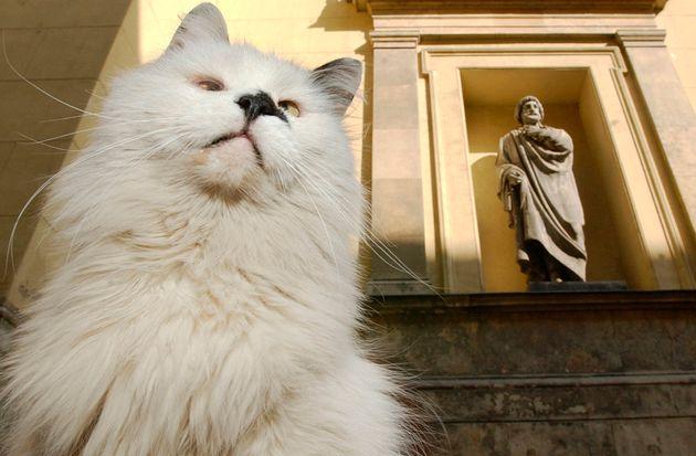 Γάλλος συμπεριέλαβε στην διαθήκη του τις διάσημες γάτες του Μουσείου