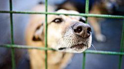 Cinq ans depuis que l'animal est un être sensible en droit: qu'est-ce qui a