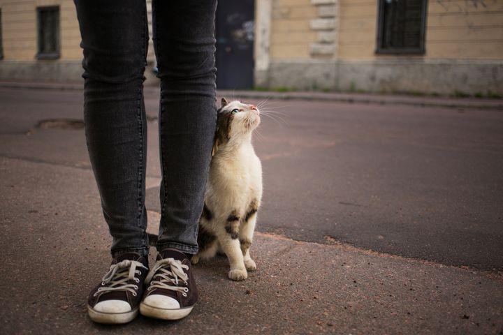 Un gato en la calle.