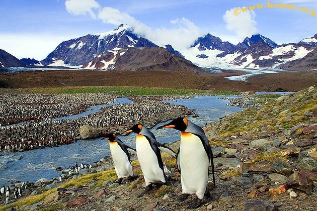 Penguins are seen in South Georgia Island, in this undated photo obtained by Reuters December 11,