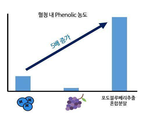 포도와 블루베리를 식품으로 먹을 때보다 <strong>포도블루베리추출혼합분말(Memophenol&trade;)</strong>로 섭취할 때 혈청 내 폴리페놀 수치가 5배 증가하는 것으로 나타났다.