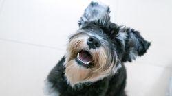Las 21 razas de perros más