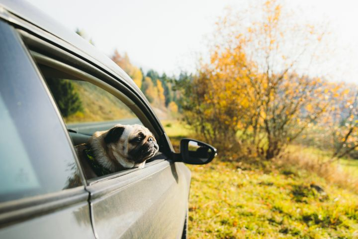 """Police said a """"pug-like"""" dog was found in the vehicle."""