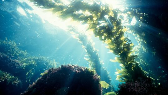 Could Seaweed Help Save Us From Climate