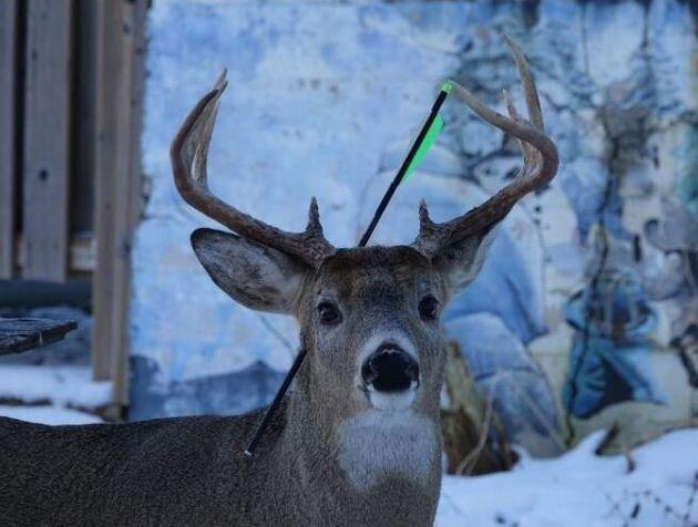 «Carrot the Magic Deer»: Το ελάφι της