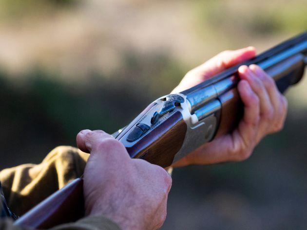 Des centaines d'animaux tués dans une partie de chasse au Portugal, le gouvernement