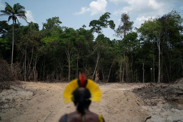 Krimej Indigenous Chief Kadjyre Kayapo, of the Kayapo Indigenous community, looks out at a path created by loggers in Altamir